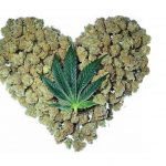 Why 58% of America Loves Weed