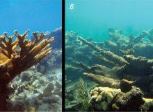 OCEAN ACIDIFICATION GLOBAL WARMING'S EVIL TWIN