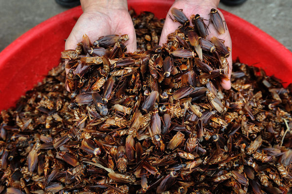 We Might Be Forced to Eat Cockroach Powder in the Future
