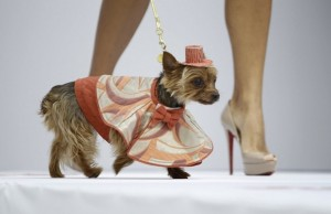 Dogs Are the Future of Fashion