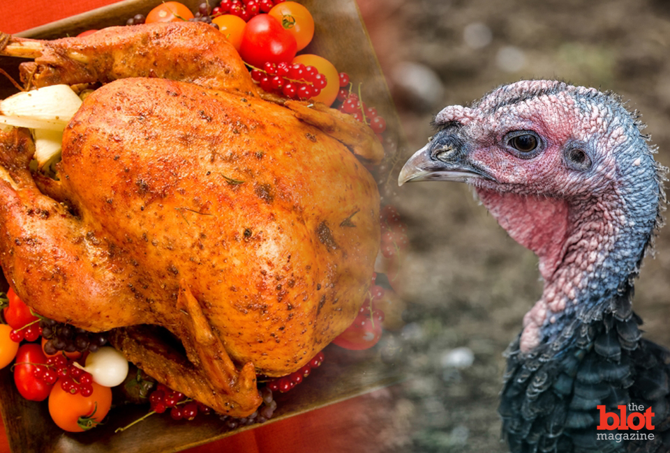 Before most of the nation gorges itself on the flesh of 46 million turkeys this Thanksgiving, let's take a moment to honor the plight of the noble turkey.