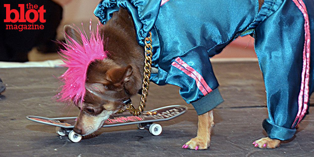 The Doggies and Tiaras pageant saw 20 well-dressed dogs competing for the honor of king and queen as they helped raise funds for Yorkie911 Rescue. (Photo by Dorri Olds)
