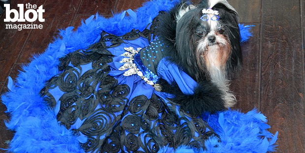 PupScouts' first Pre-Oscar Red Carpet Pawty, held Sunday, featured dogs dressed in fancy attire inspired by some of today's biggest movie stars. Here is Princess, in a gown made by her dad Kevin Ugarte. (Photo by Dorri Olds)