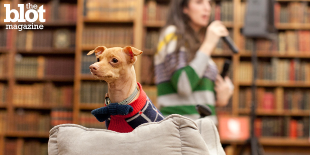 """Tuna the Chiweenie celebrated his book """"Tuna Melts My Heart: The Underdog with the Overbite"""" at Strand Book Store, and it was the cutest book signing ever. (Photo by Milla Chappell)"""