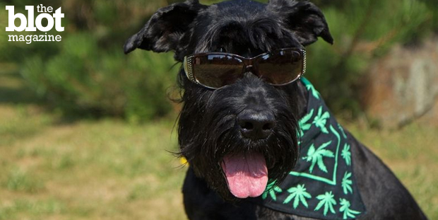 Fido's hip pills may make your Saturday night more mellow: A Nevada senator is sponsoring a measure to allow vets to prescribe marijuana to sick pets.