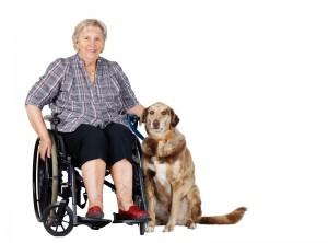 dog old lady
