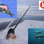 Science Confirms the Obvious, Sea Unicorns are Gangsta!