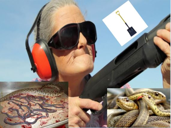 Septuagenarian Lady Kills 11 Snakes Using a Shotgun, Shovel and Rake Handle