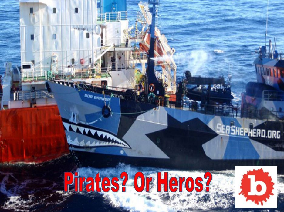 Anti-Whaling Group Ends Patrols as Whalers Get Military Support