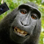 Finally, Monkey Selfie Case Settled With PETA, Photographer