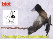 Male Ducks Penis Length Get Longer the More Time They Spend Together