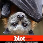 Aussie Summer features extreme heat, kills 100's of Fox BatsAussie Summer features extreme heat, kills 100's of Fox Bats