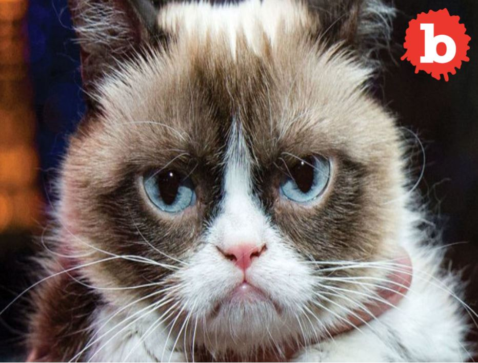 Grumpy Cat get Big Payday. No Cat Smile, but Grumpy comes in Happy.