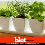 Indoor Plants to Improve Your Life & Get You a Green Thumb