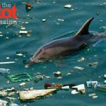 The GPGP is Real and It's Killing Marine Life