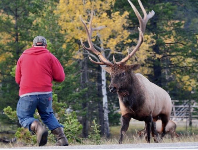 Houston Man Kicks Momma Moose, Moose Kicks Man, Man Loses