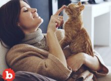 Stop Judging me for being a Proud Cat-Owner