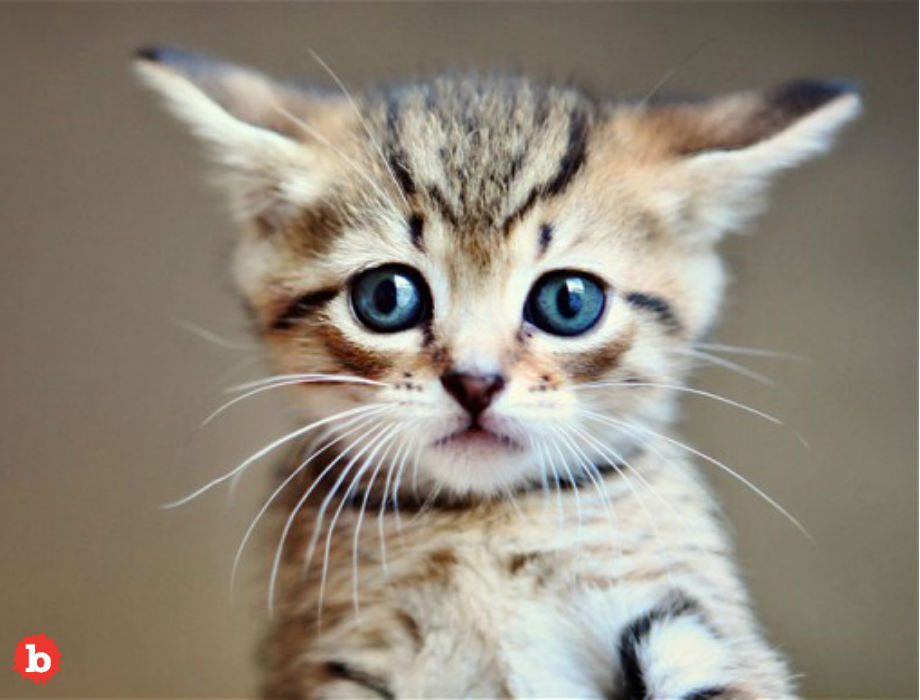 10 Ways to Tell if Your Cat or Kitten is Sick