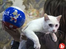 Achilles the Russian Psychic Cat Called 1st World Cup Game