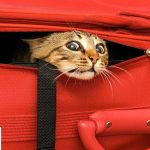 Summertime Cat Travel Guide, the Best How-To