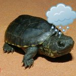 Turtles Love Hailstorms and Vice Versa