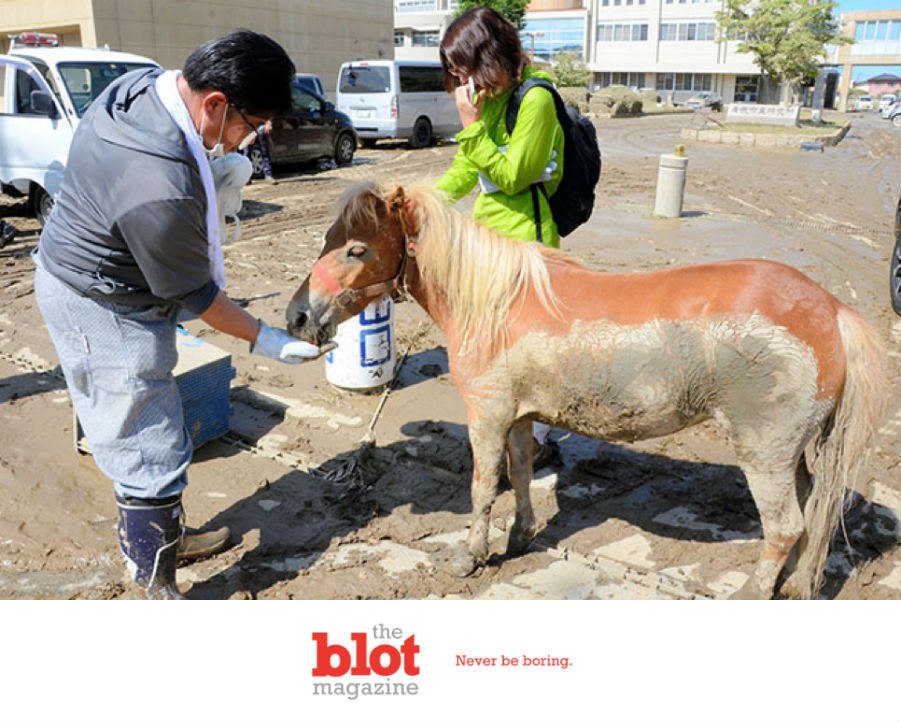 Horse Lost in Japanese Flood Found Standing on Rooftop