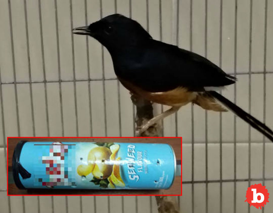 Tragic, Endangered Bird Smuggled In A Can of Chips