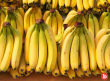 6 Amazing Benefits If You Eat 2 Bananas a Day