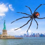 Global Warming Sends Black Widow Spiders Ever Further North