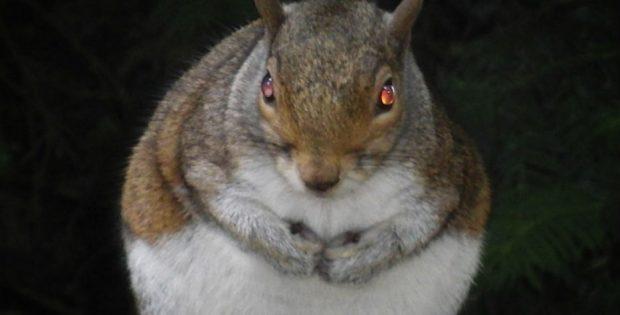 Did Zombie Squirrel Brains Kill a Rochester Hunter?