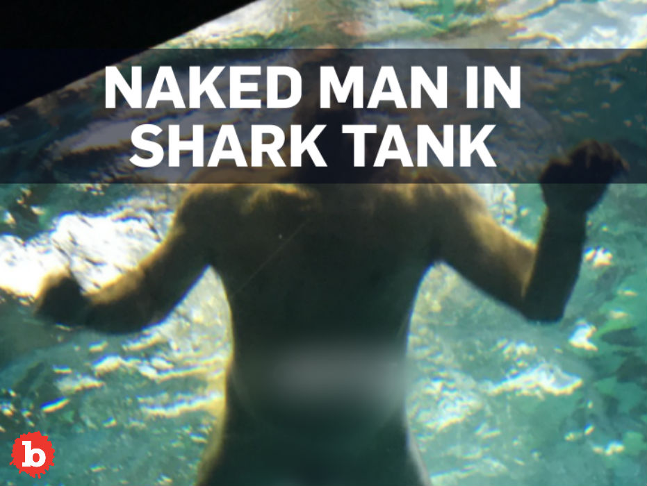Canadian Dumbass Strips Naked, Jumps Into Shark Tank