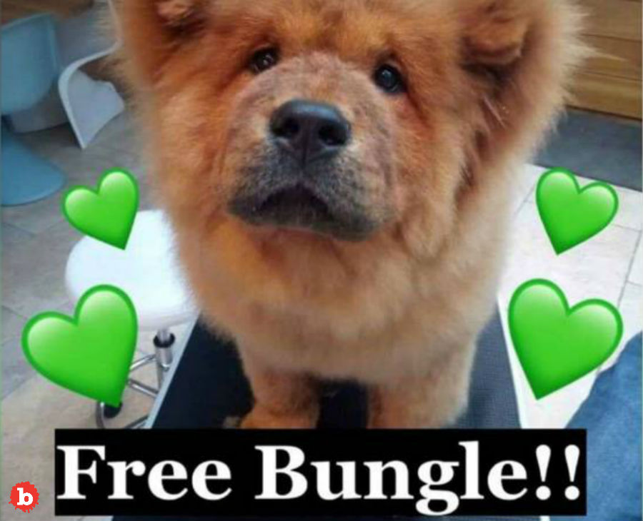 Police Release Chow Puppy Bungle After Public Uproar