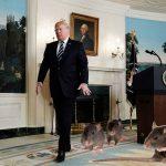 Washington, DC Infested With Genius Rat Problem
