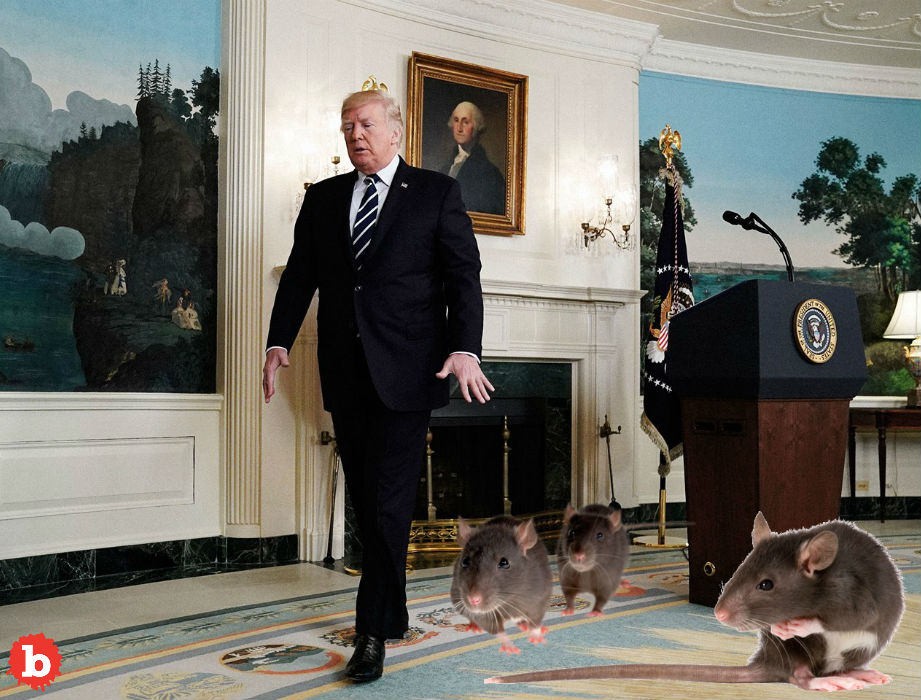 Washington, DC Infested With Genius Rat Problem