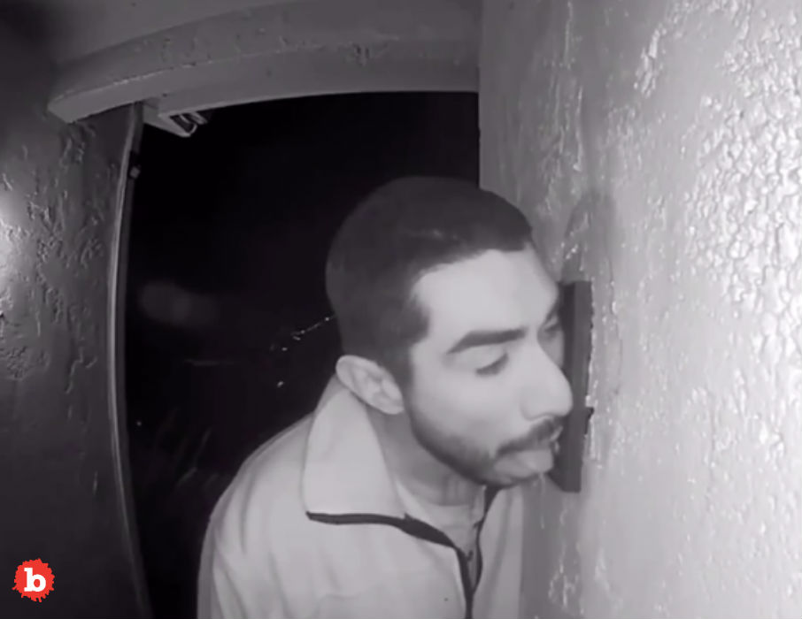 California Creeper Licks Doorbell for Three Hours