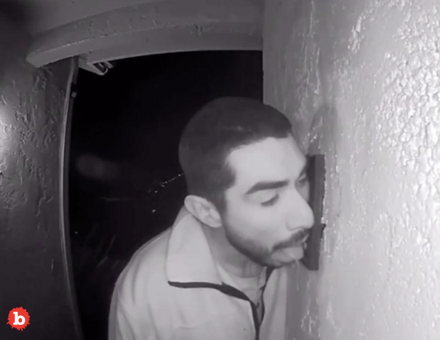 California Creeper Licks Doorbell for Three Hours