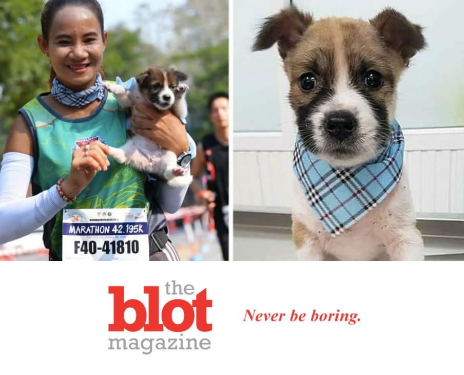 Woman Running Marathon Picks Up Lost Puppy for 19 Miles