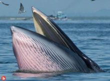 Man Survived Almost Being a Whale Dinner