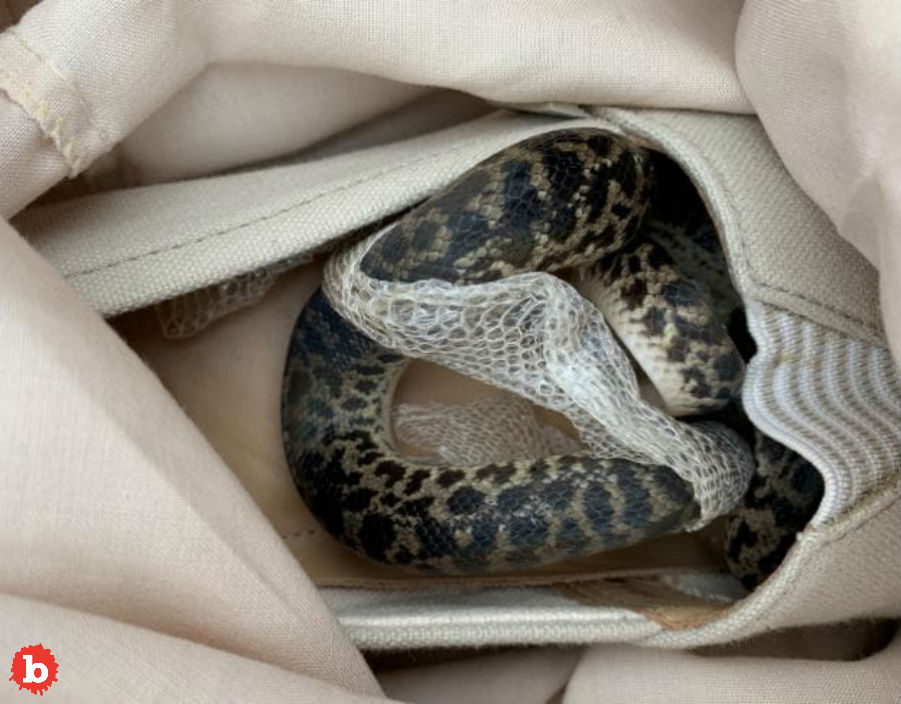 Snake Stows Away in Scottish Woman's Shoe Across the World