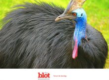 Prehistoric Bird That Killed Owner For Sale in Florida