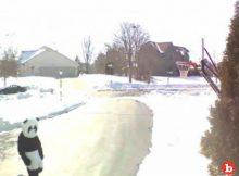 Wisconsin Neighbor Calls Police on Man in Panda Suit