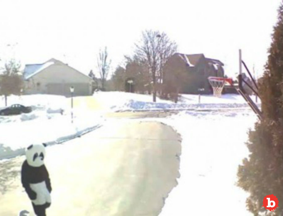 Wisconsin Neighbor Calls Police on Man in Panda Suit