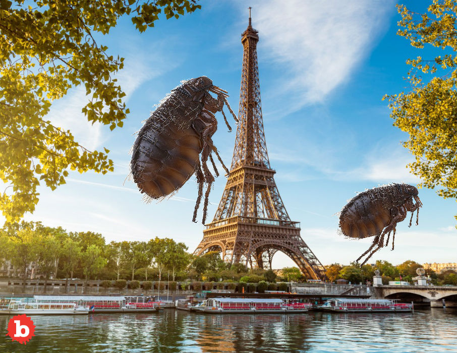 Paris Police Flee Flea Infested Precinct Station