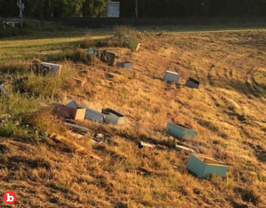 Texas Asshat Torches 600,000 Bees, Helps to End the World