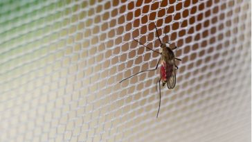 Graphene in Your Clothes Could Be Perfect Mosquito Repellant