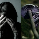 Got Depression? Magic Mushrooms May Soon Give Treatment