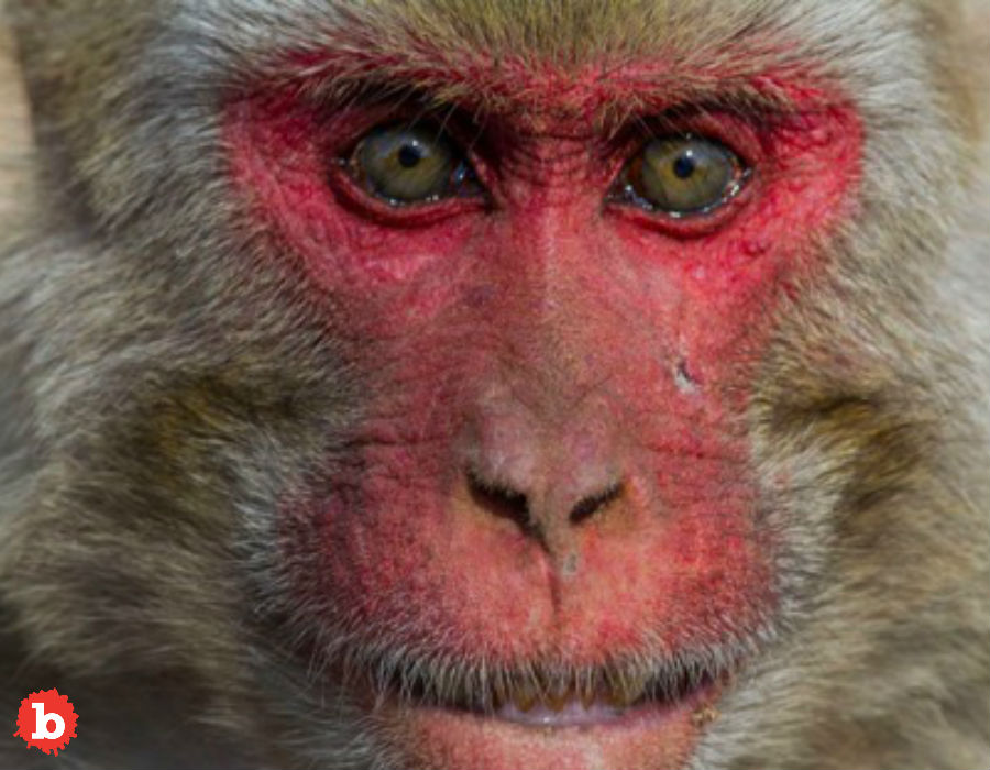 Florida Gets a Bad Case of the Monkey Herpes