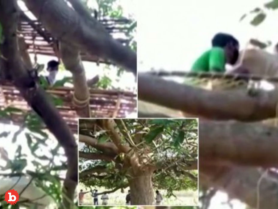 Villagers in India Forced Into Trees for Coronavirus Isolation
