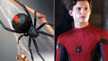 To Become Spiderman, 3 Bolivian Brothers Have Black Widow Bite Them