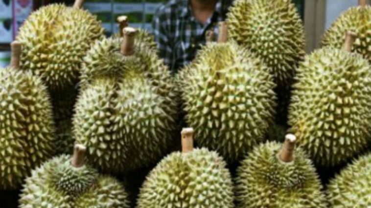 Durian Fruit Strikes Again, Evacuating Post Office in Bavaria